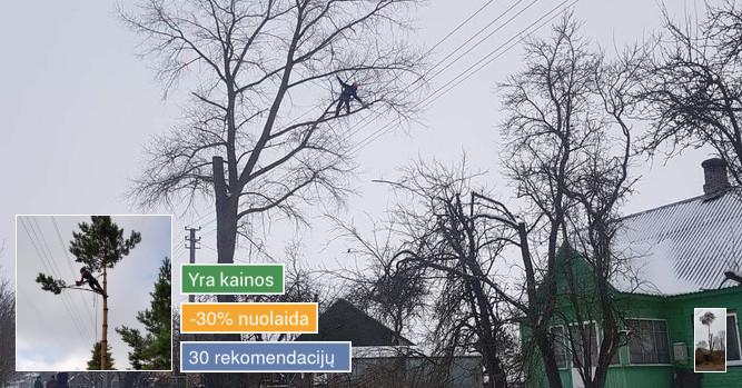 Pavojingų avarinių medžių pjovimas ir kelmų naikinimas