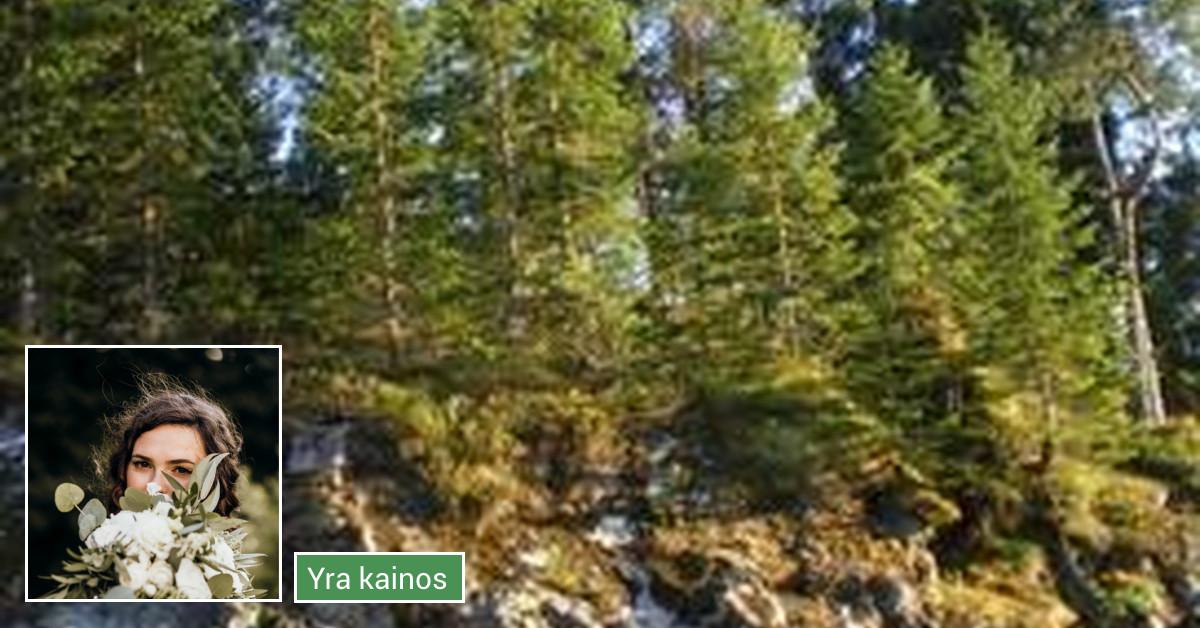 Norvegų kalbos pamokos, Seo tekstų rašymas, redagavimas