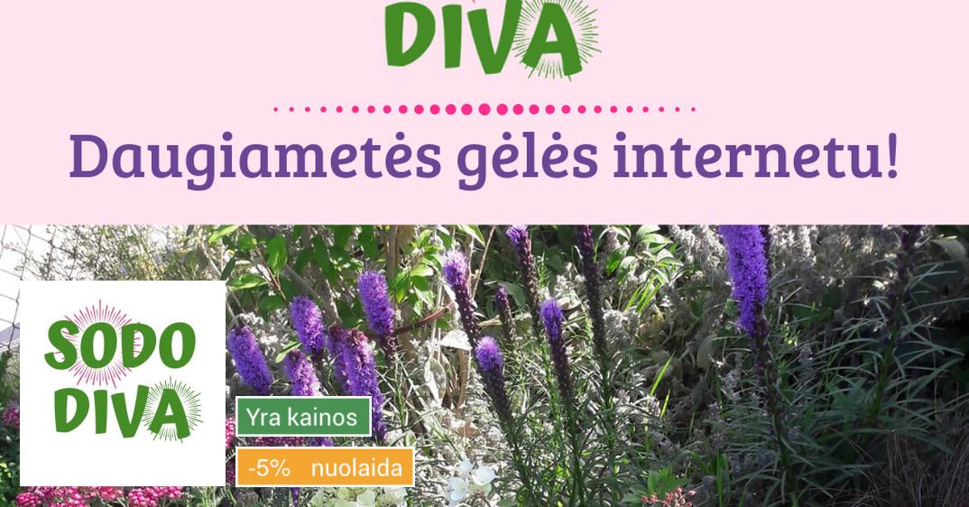 Sodo Diva: Daugiametės gėlės ir dekoratyviniai augalai