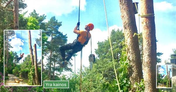 Medžių pjovimas visoje Lietuvoje