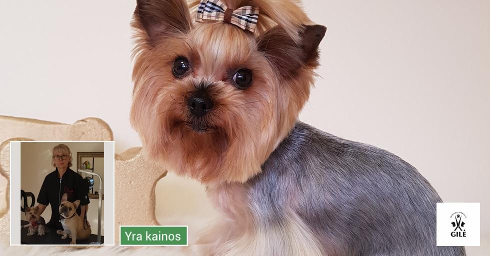 Šuniukų kirpykla Gilė