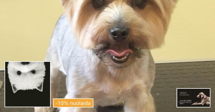 Šunų kirpimas Klaipėdoje